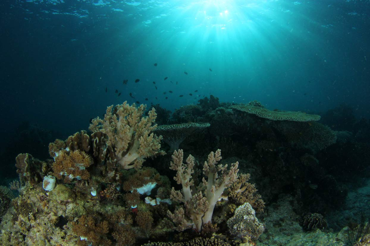 www.the-three-p.com-romblon-island-underwater-macro-photography-scuba-diving-dive-site-cobrador-naguso-wall-jun-lao-xs