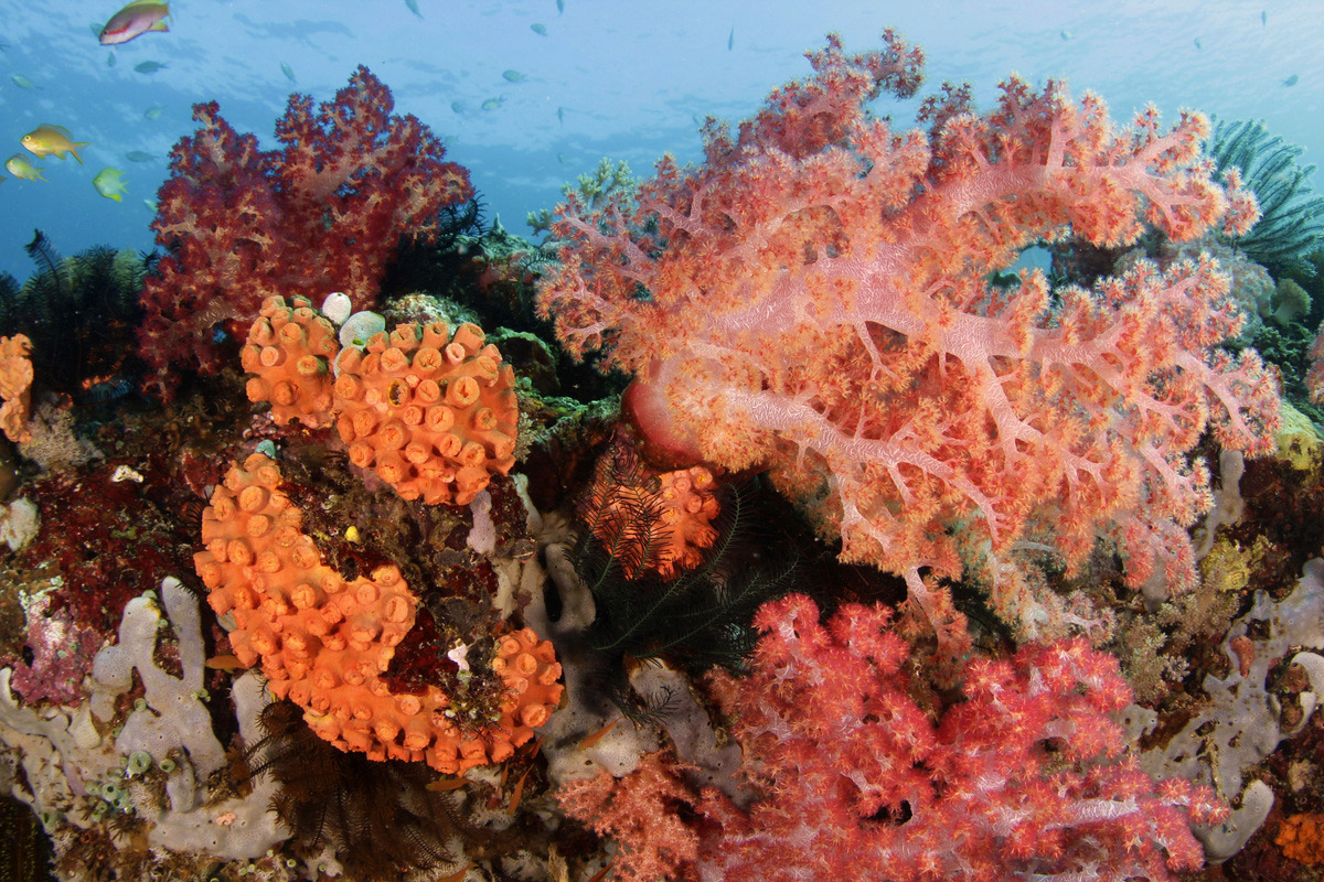 www.the-three-p.com-romblon-island-underwater-macro-photography-scuba-diving-dive-site-suwa-wolfgang-holz-xs