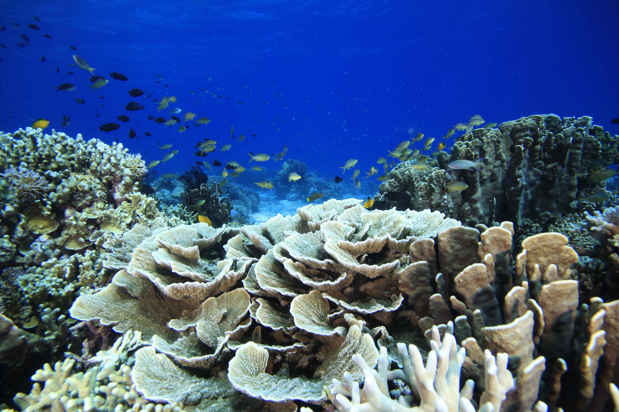 www.the-three-p.com-romblon-island-underwater-macro-photography-scuba-diving-dive-site-talisay-wolfgang-holz